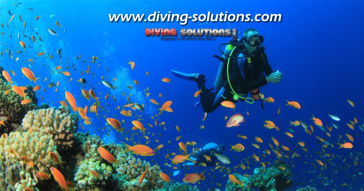 Diving Equipment For Sale Ottawa, Ontario, Canada Classifieds