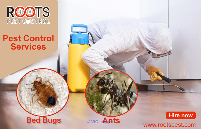 Professional Bed Bugs Control Service in Canada ottawa